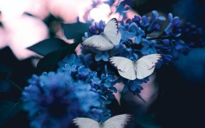 HD Butterfly Wallpapers Free 2021